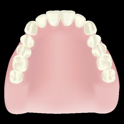 世田谷区の歯医者 尾山台駅前歯医者 レジン床義歯(保険適用)